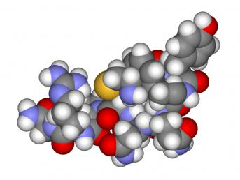 Vasopressin شیمی عشق