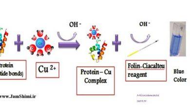 دانلود جزوه آموزش اندازه گیری غلظت پروتئین به روش لوری Lowry