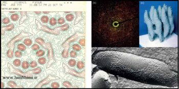 دانلود مقاله از کریستالوگرافی الکترونی تا کرایو الکترون میکروسکوپی تک ذره