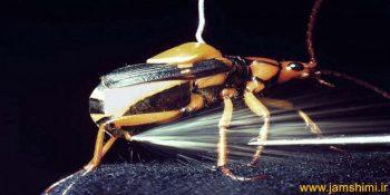 دانلود فیلم از سوسک بمب افکن Bombardier beetle