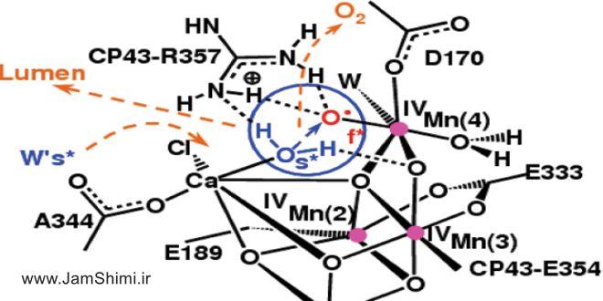 مقاله شیمی طراحی کمپلکس از نمک های معدنی بر پایه منیزیم هیدروکسید به عنوان پیشران