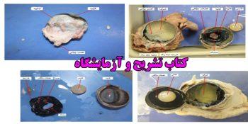 دانلود کتاب تشریح و آزمایشگاه مربوط به زبان فارسی