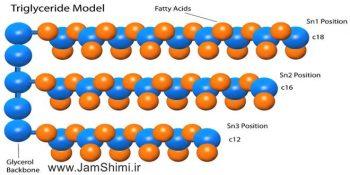 دانلود جزوه آموزش بیوشیمی بخش لیپیدها Lipids