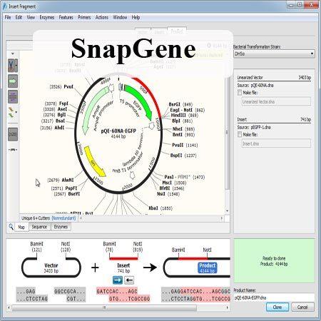 دانلود SnapGene 5.2.4 Win/ 3.2.1 Mac نرم افزار بیوشیمی شبیه سازی توالی DNA