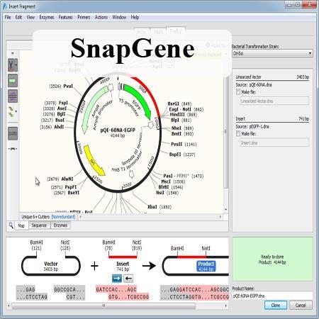 دانلود SnapGene 3.2.1 Win/Mac نرم افزار بیوشیمی شبیه سازی توالی DNA