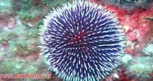 حذف کربن دی اکسید هواکره با الهام از جوجه تیغی دریایی